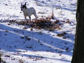 maudry in pasture